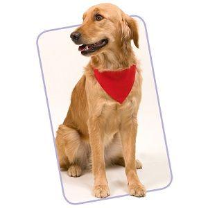 collar perros personalizado