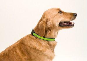 collares personalizados para perros